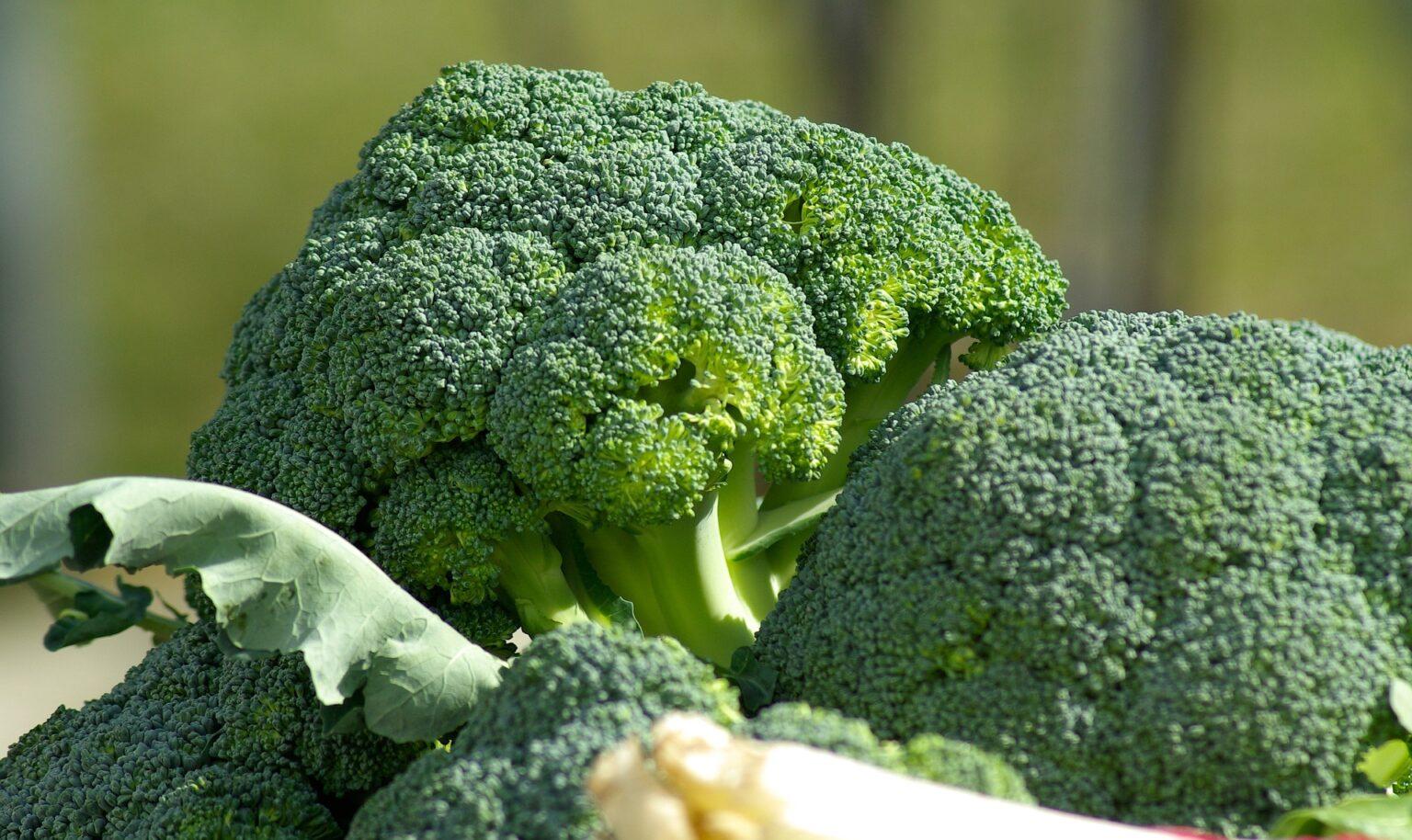 vegetables-673181_1920